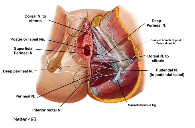 Perché provo dolore al pene quando è in erezione? - Dr. Francesco De Luca